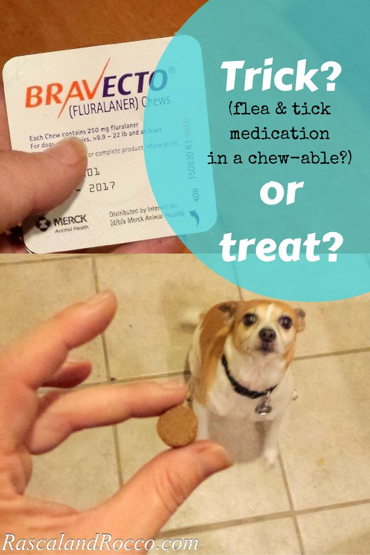 Tick season is here. Are you protected? Question you should ask your vet about flea and tick prevention for dogs #12BRAVECTO ad @MerckAH More product info: https://goo.gl/aqJOrP