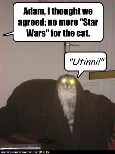 .: Stuff, Jawa Cat, Utinni, Stars War, Funny, Even, Humor, Kitty, Starwars