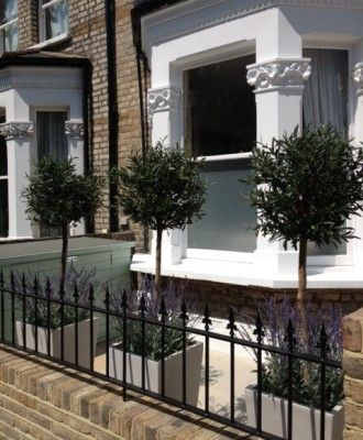 stunning exterior olive topiary with underplanting of english lavender victorian front garden
