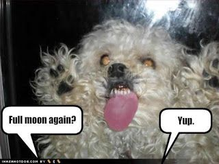 Funny Image Gallery: Very funny dog pictures with captions 'n' funny dog picture