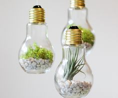 DIYs and other ways you can reuse old light bulbs from snow globes to terrariums.