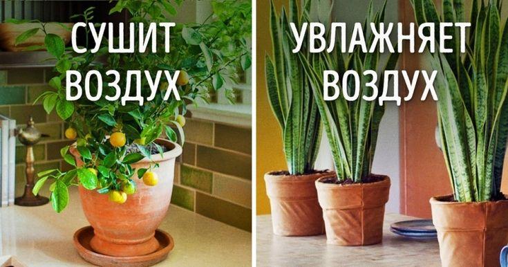 Многие недогадываются оневероятной способности домашних растений влиять намикроклимат. Растения создают комфортную атмосферу, стабилизируют влажность воздуха инасыщают его кислородом, чтобы маленькие дети илюди, подверженные аллергии, могли безопасно дышать.