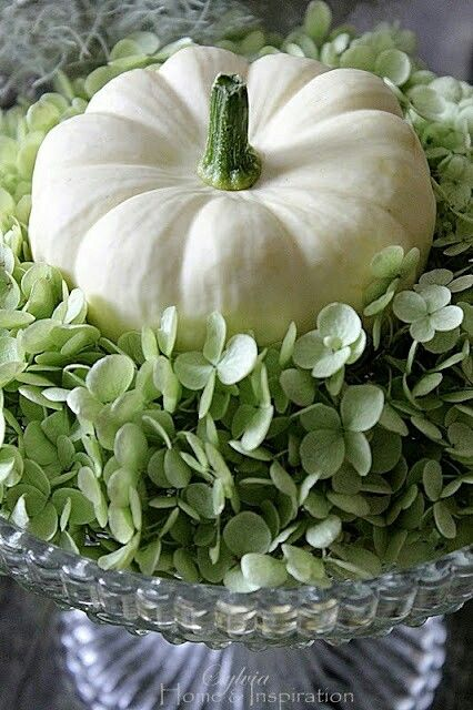 FALL / THANKSGIVING:: LIGHTER ALTERNATIVE:: CENTERPIECES, TABLETOP: White pumpkins and Hydrangeas ~~ This is so refreshing!!! I love fall and its rich warm colors, but I love this variation of fall decor. Hydrangeas form a beautiful bed for white pumpkin. @Trudy Joy
