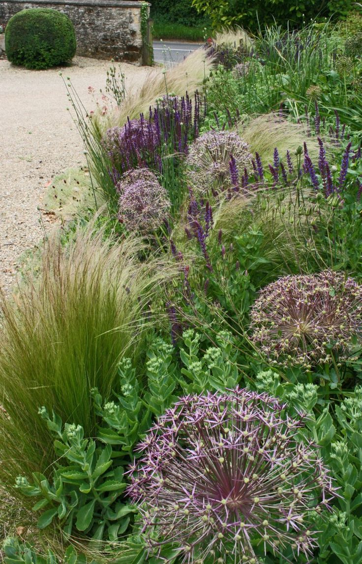 Garsington_03 Sarah Price, Garsington, Oxfordshire, combination of Sedum, Stipa, Salvias, Erigeron, Origanum & Allium
