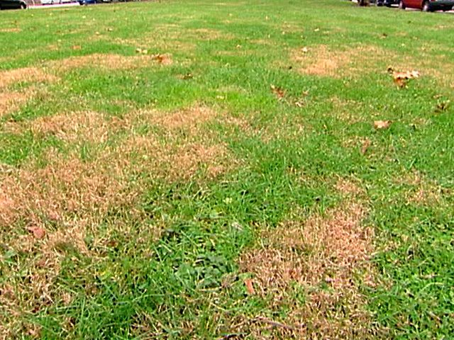 See how to deal with the worst lawn problems, from fungi to dog damage.