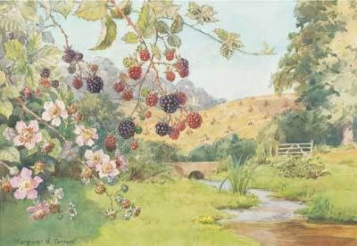 Margaret W. Tarrant (1888 – 1959, English) vintage postcard - Blackberry