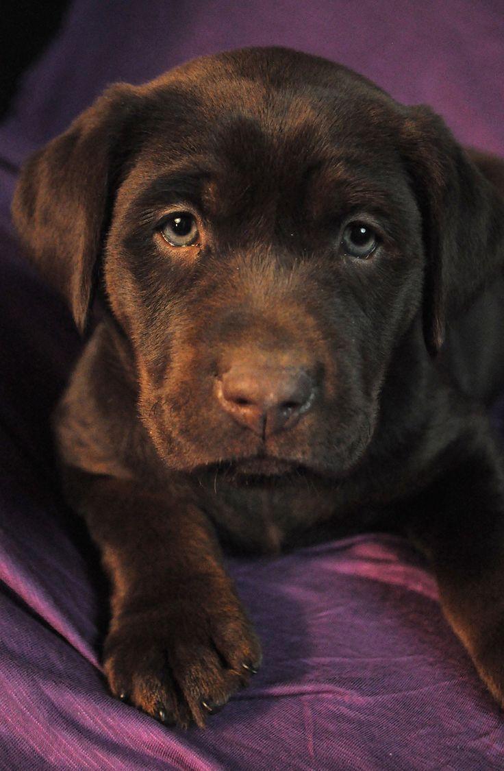 Cephalexin dog died