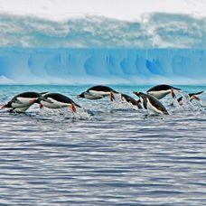 Ιπτάμενοι πιγκουίνοι στην Ισλανδία. Παιχνίδια συντροφιάς ζεσταίνουν τη διάθεση στο παγωμένο περιβάλλον. NZZ.