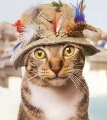 gone fishin'....: Hats, Cats, Gone Fish, Fish Cat, Flying Fish, Fishing,  Tabby Cat, Baby Cat, Animal
