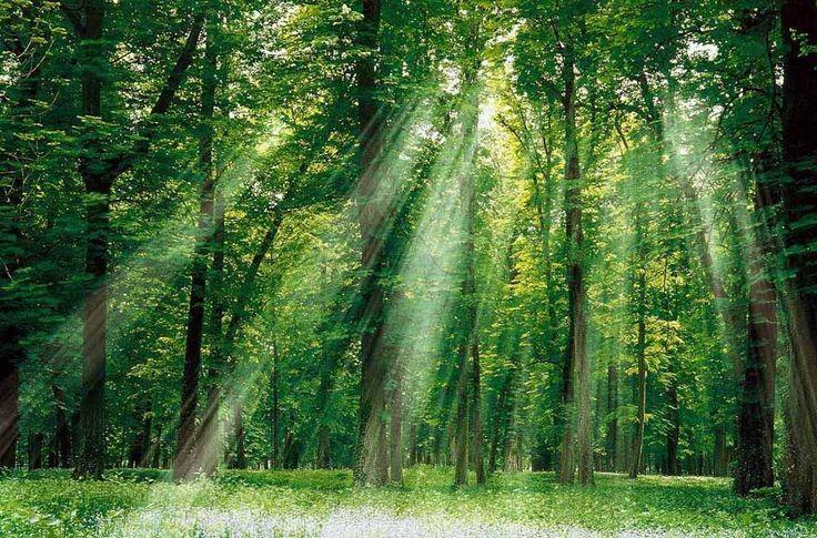 El sistema emula así un proceso natural, la fotosíntesis, merced al cual las plantas, aprovechando la energía del sol, sintetizan carbohidratos a partir de dióxido de carbono y agua. Un bosque artificial convierte el contaminante CO2 en productos valiosos. GuíaSana