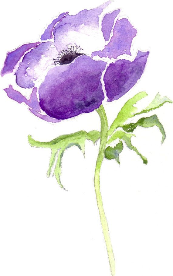 Blue Anemone Flower Watercolor Giclee Print, Floral Watercolour Artwork,
