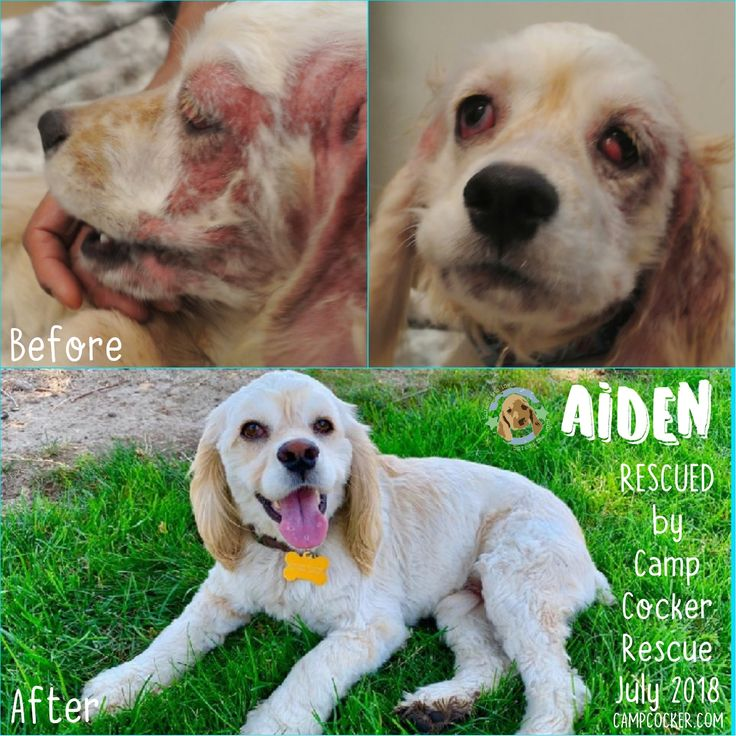 When we rescued Aiden, he was suffering from Sarcoptic