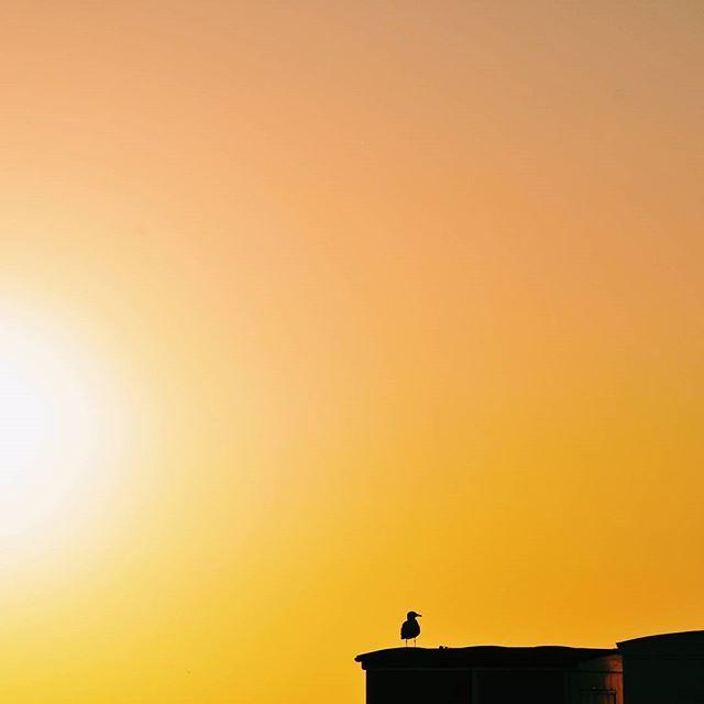 Douce soirée / nuit - souvenir de la plage - LH  #instatraveling #igerstravel #exploremore #naturelovers #worldofnature #view #panorama #travel #travelblogger  #neverstopexploring #exploretheworld #exploreeverything #travelphotography  #wanderlust #igersnormandie #normandy #normandie #ig_normandy #ig_normandie #lehavre #lehavretourisme