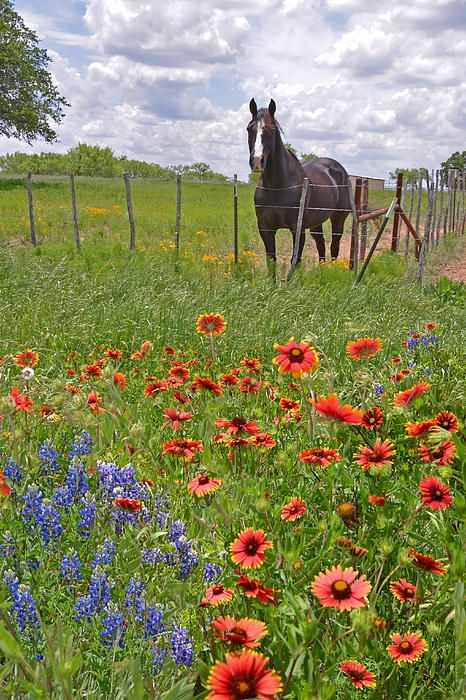 Sweet Times in the Hill Country by Lynn Bauer - Texas Wildflowers