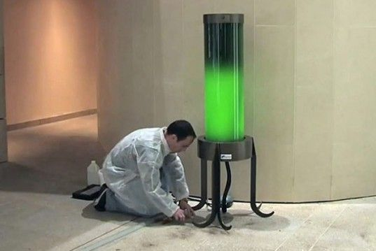 One day, dark city streets could be illuminated with biotechnology like this glowing green lamp, which is made with fluorescent algae. The algae naturally emits a soft glow, and at the same time it draws harmful carbon out of the atmosphere. So this street light is naturally good for the environment.