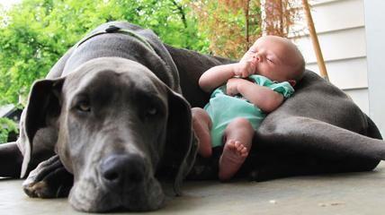Cani grossi e bimbi piccoli quelle amicizie senza misure