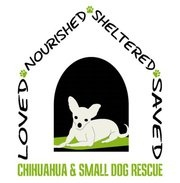 Chihuahua and Small Dog Rescue