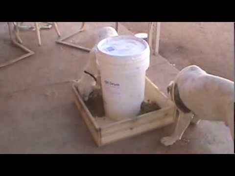 DIY Automatic Dog Feeder