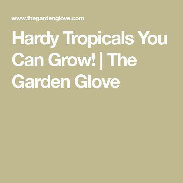 Hardy Tropicals You Can Grow! | The Garden Glove