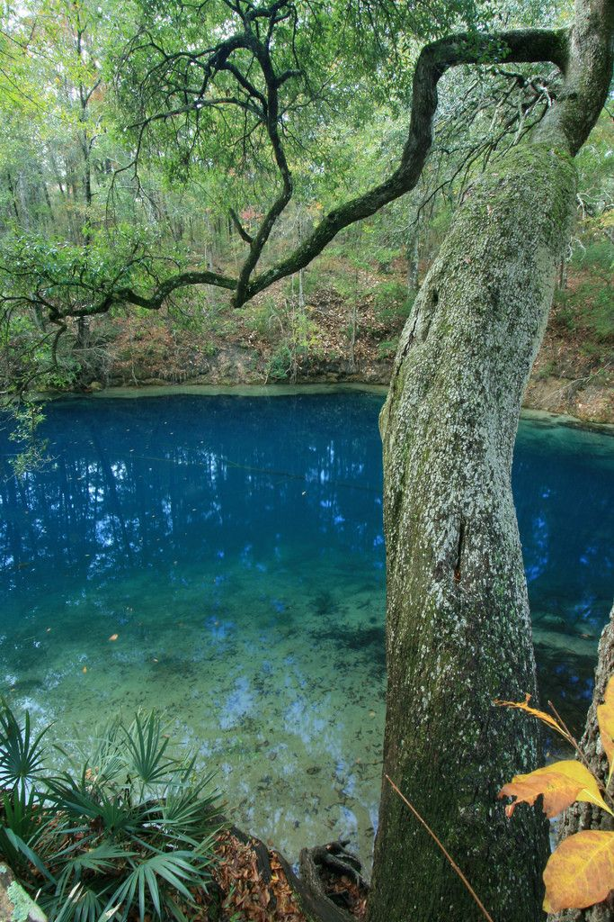 An opening into one of the most extensive underwater cave systems in the world, Leon Sinks Geological Area, Florida