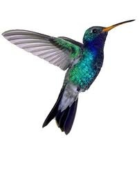 hummingbird tattoo. Add it to the one I already have