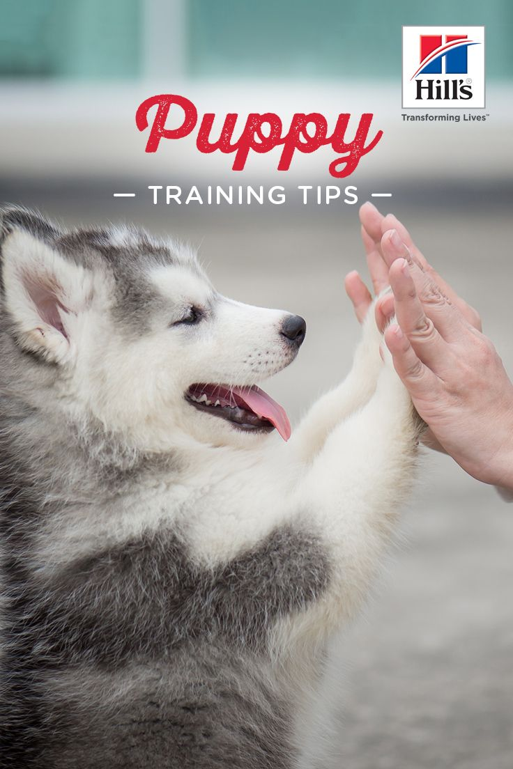 5 Helpful Tips For Training A Puppy Training Your Puppy Dog