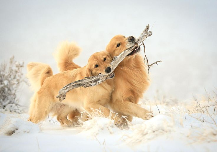 .Reminds me so much of Wally and LuLu!  Pretty in the snow.  We would have sand.