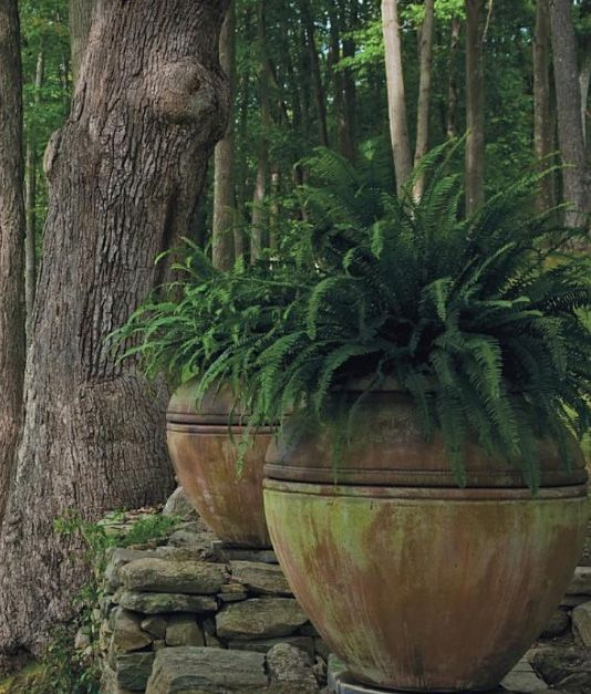 Huge pots-these are a great shape-with fern coming out the top. Has a great rustic feeling.