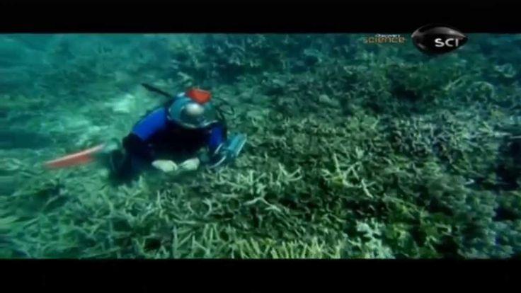 Maravilhas da Natureza: A Grande Barreira de Corais | Dublado [HD] Disco...