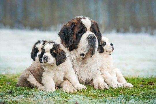Papa et ses bébés.