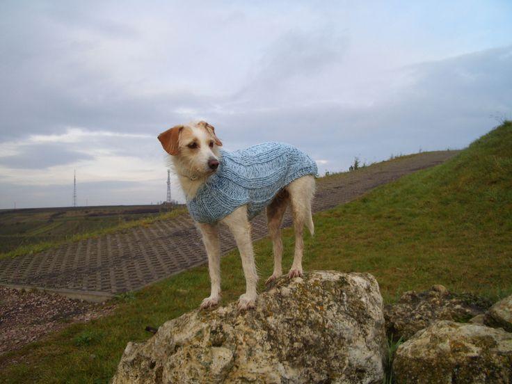 36 best Hundepullover images on Pinterest