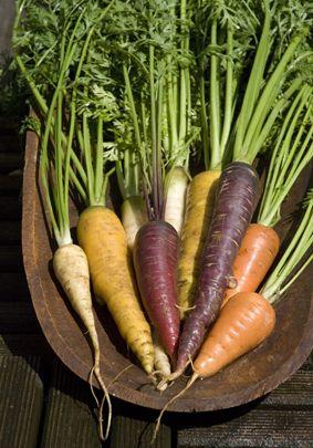 Wat is er leuker dan verassende kleuren wortel te telen? Wordt je toch blij van? In onze kookstudio kun je leren welke gerechten je van al die wortels kun maken. www.vergetengroenten.nl
