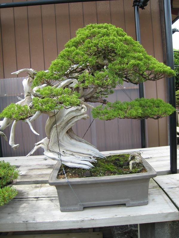 Masahiko Kimura's creation