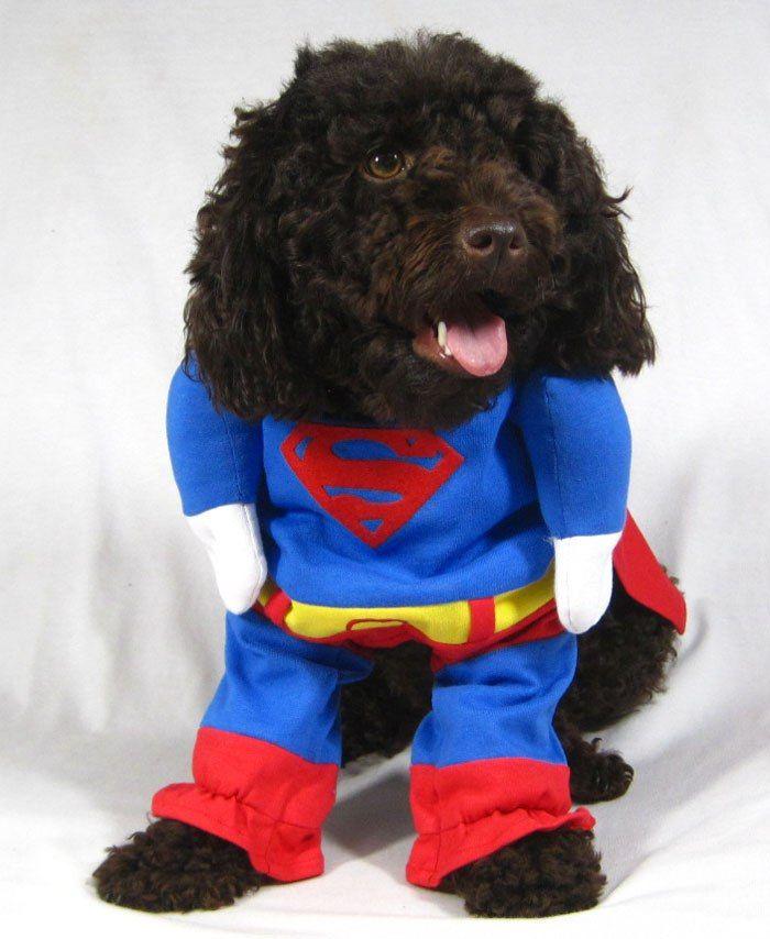 Костюм супермена для собак