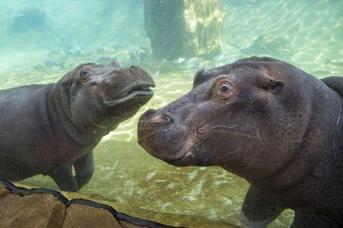 Beauval : les nouveaux paris du plus grand zoo de France
