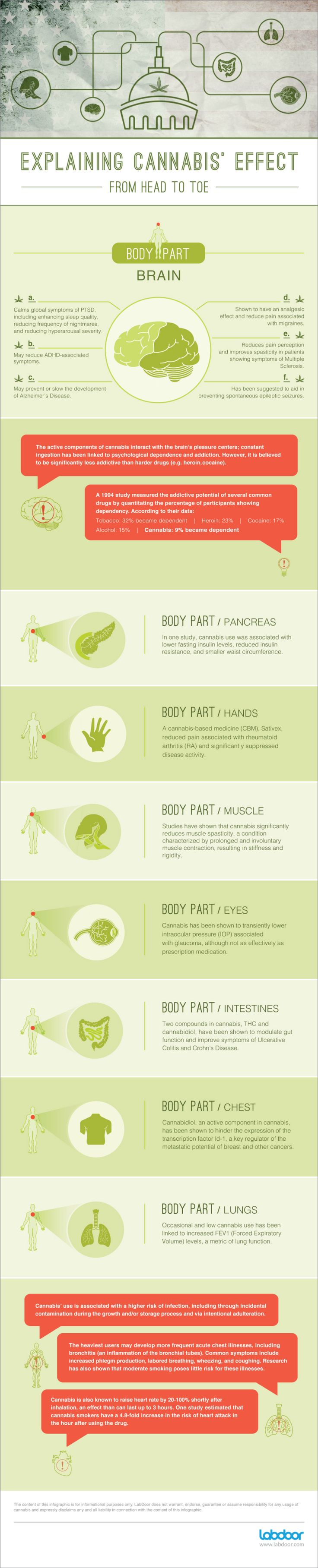 Explaining cannabis' effects from head to toe [infographic] - Holy Kaw!