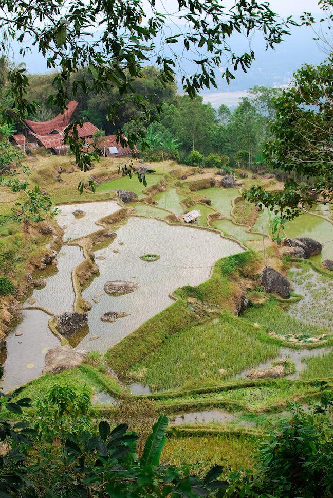 Tana Toraja: Village Trekking around Batutumonga.