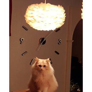 Katten älskar också fjäderlampor Du hittar lamporna i shopen! @globalxdesign  #dunlampa #fjäderlampa #belysning