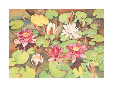 Rita Angus - Waterlillies 1950  Gallery Prints