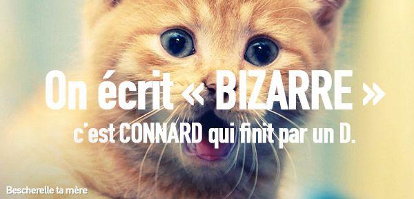 Bescherelle ta mère : des chatons pour apprendre le français à vos amis