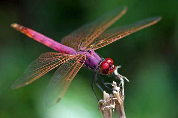 There is nothing like watching a dragon'fly'.