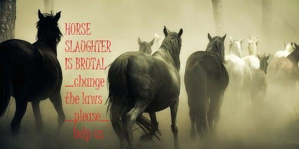 Stop the Brutal Horse Slaughter! Demand Strict Regulations NOW! http://www.thepetitionsite.com/de/takeaction/821/002/681/