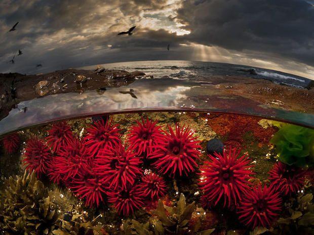 Красивые подводные фотографии: удивительный параллельный мир http://joinfo.ua/leisure/animals/1187435_Krasivie-podvodnie-fotografii-udivitelniy.html