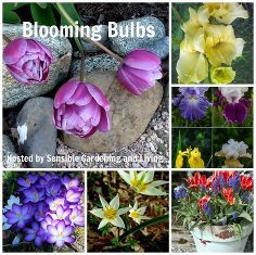 blooming bulbs, flowers, gardening, perennials, The How What Where and When of garden bulbs
