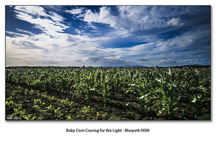 Morpeth NSW