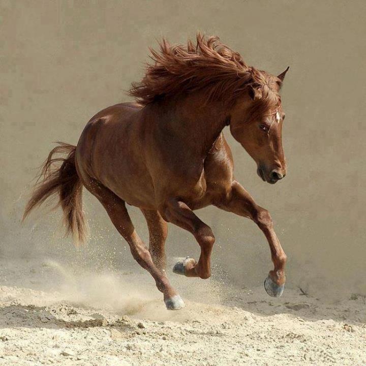 Come la donna, così il cavallo non ama i deboli, tanto meno li rispetta.  Alessandro Alvisi, Aforismi e paradossi ippici, 1938