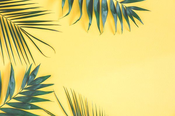 Tropical Palm Leaves Computer Wallpaper Desktop Wallpapers Laptop Wallpaper Wallpaper Notebook