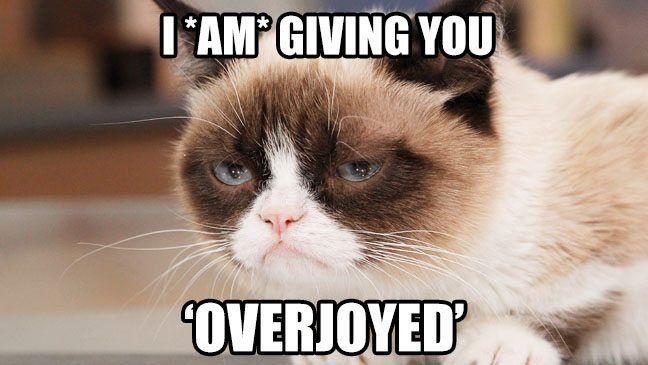 O gato de US$ 100 milhões — ou outra treta de direitos autorais