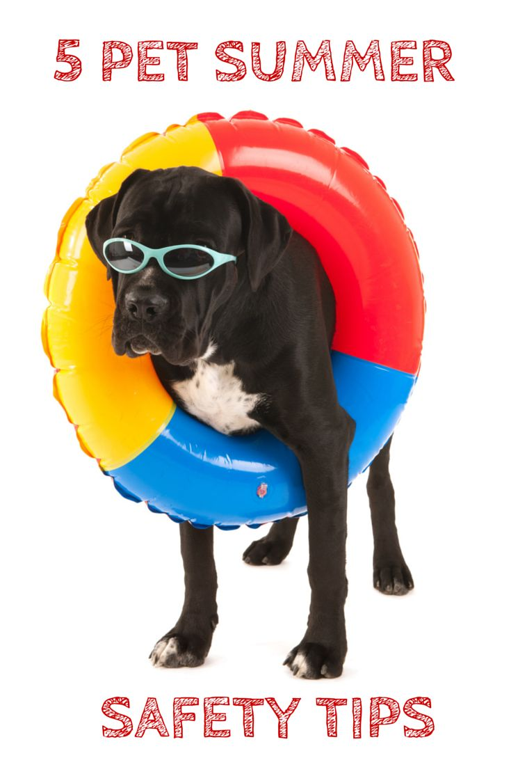 217 Best Beat The Heat With Your Pets Images On Pinterest