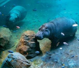 Camden Aquarium, NJ